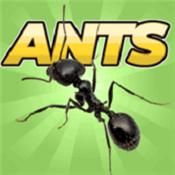口袋蚂蚁模拟器 V0.017